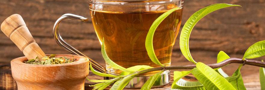 verveine en thé